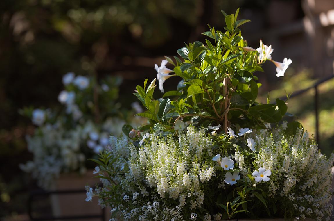 Flower Pots at Endicott House